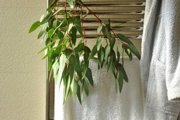 Best Aromatic Shower