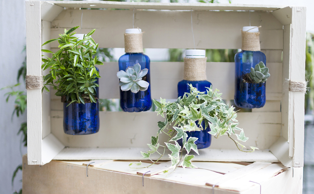 Recycled bottles being used as pots for holding plants.