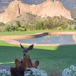The pool at Garden of Gods, a resort retreat in Colorado featuring a visiting deer.
