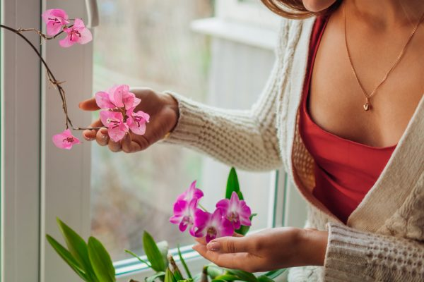 Woman tends to houseplants - keep the air clean by growing plants at home.