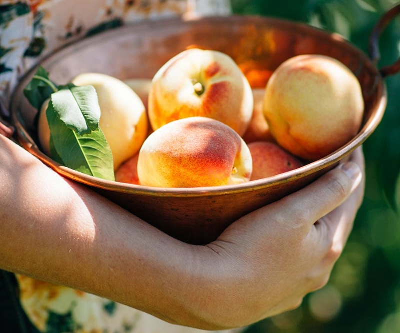 Picking and placing peaches in a bowl being held.