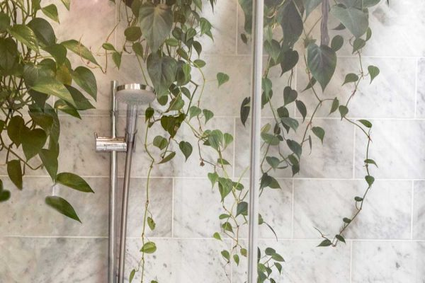 A glass door shower with plants hanging from above.